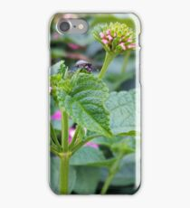 Lantana and the Stink Bug iPhone Case/Skin