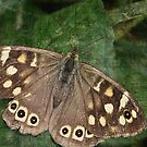 Speckled Wood Butterfly by artsandherbs