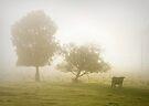 Morning musings ... by Rosalie Dale