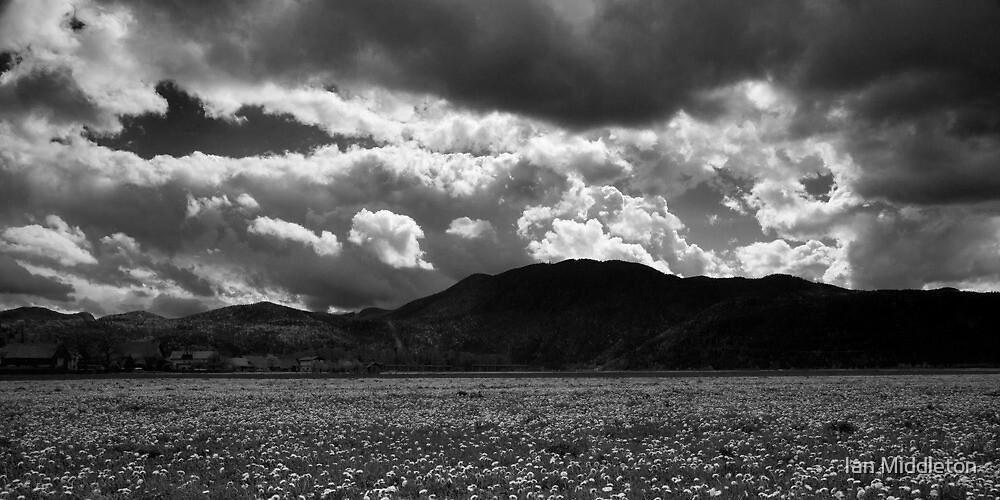 Ljubljana marshland in Black and White by Ian Middleton