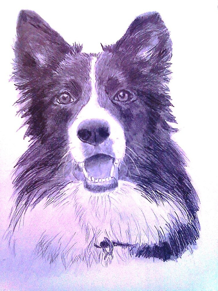 Border Collie by DianeL