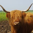 Coo by Ranald