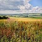 Wild Flowers in the Sussex Countryside by John Lines