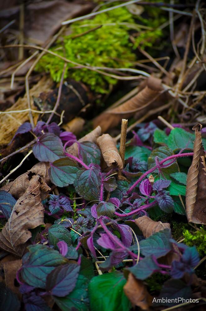 Little piece of wonderland  by AmbientPhotos