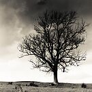 Tree, Southern Upland Way, Scottish Borders by Iain MacLean