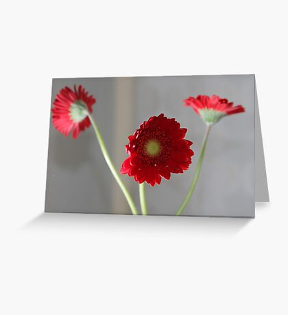 red gerber daisies Greeting Card