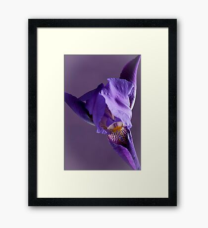 Purple Iris 1 Framed Print