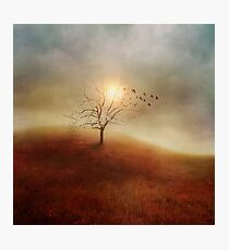 Lone Tree Love I Photographic Print