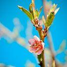 Peach by WireKat