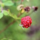 Raspberry Charm by aprilann