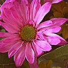 Pink Daisy by EmilyDawn