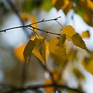 Dreamy Yellow Leaves Swaying in the Wind  by Georgia Mizuleva
