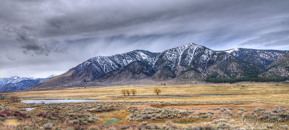 Jacks Valley, Nevada by Dianne Phelps