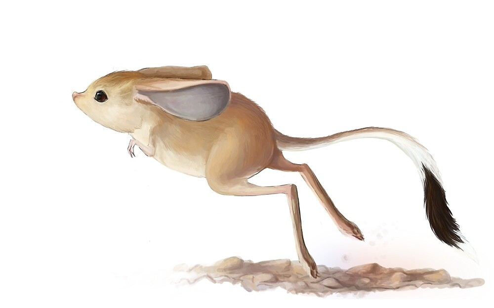 Gobi Jerboa by Ashley Dadoun