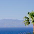 La Gomera, Islas Canarias by Thomas Tolkien