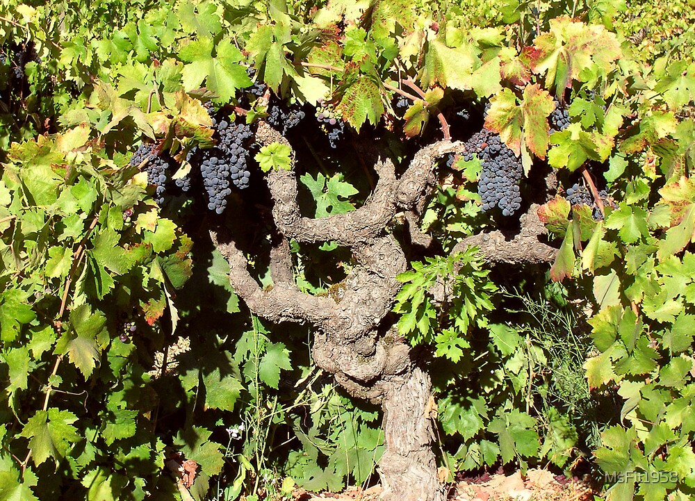 I heard it on the Grapevine by MsFit1958