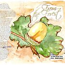 Country Diary - From the Forest by Maree Clarkson