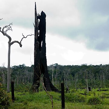 monument to dying Rain Forest 007 by yesdigiterarte