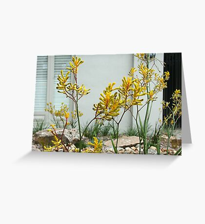 Anigozanthos  'Bush Gems'  Greeting Card