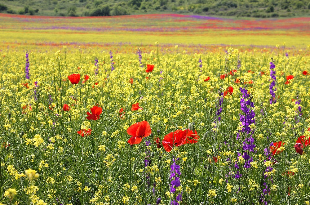 Bright Rapeseed Field With Poppies And Delphiniums by kirilart