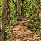 Along The Beaten Path by JGetsinger