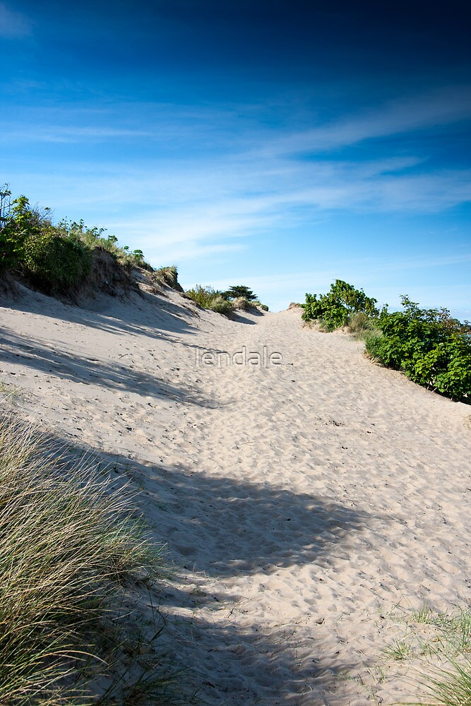 Sand Dunes and Grass. by lendale
