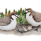 «Red-capped plovers' nest» de Milly Formby