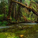 My Secret Paradise - The Beautiful Branch by Thomas Dawson