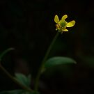 Yellow Flower  by MIchelle Thompson