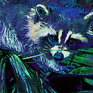 midnight racoon by jashumbert