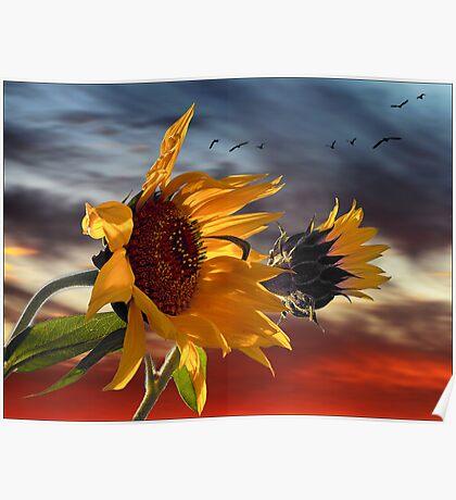 hot summer wind Poster