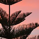 Sunset silhouette 2 by Fizzgig7