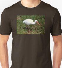 American White Ibis Bird T-Shirt