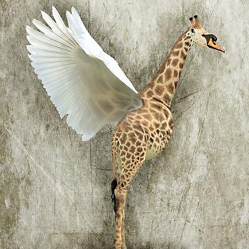 Giraffa Cygnus by gavinkingphotography