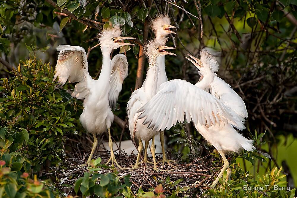 Little Blue Heron Quartet by Bonnie T.  Barry