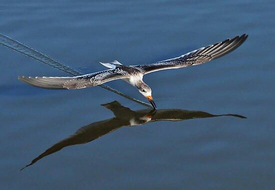 Skimming Along by Kathy Baccari