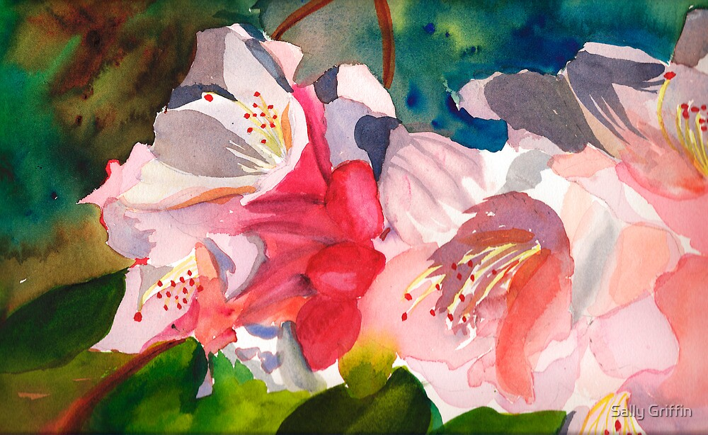Rhoddies in Bloom by Sally Griffin