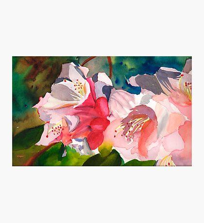 Rhoddies in Bloom Photographic Print