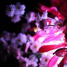 Crimson by Mickey Hatt