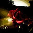 Roseing sun by Margherita Bientinesi
