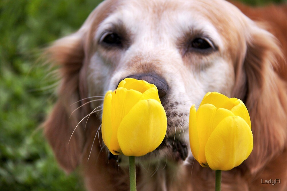Tiptoe through the tulips by LadyFi