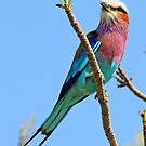 Another pretty colorful roller by Anthony Goldman