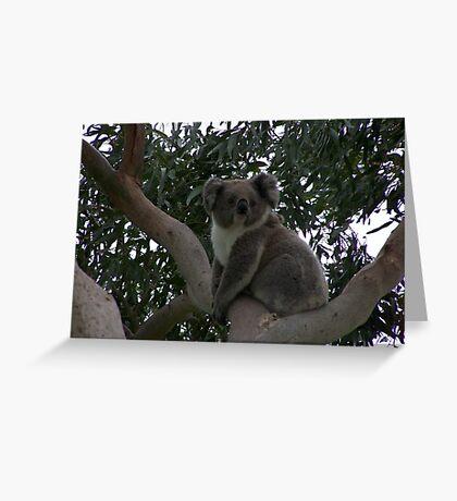 Koala at Kingsvue Greeting Card