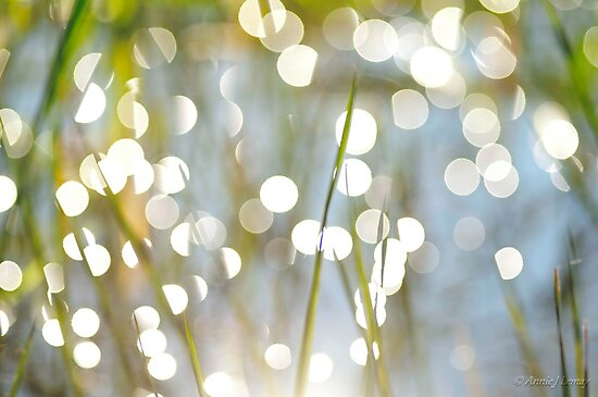 Grass Bokeh by Annie Lemay  Photography