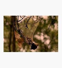 Funnel Web Photographic Print