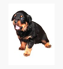 Cute Rottweiler Puppy Photographic Print