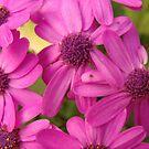 Purple Flowers in May 2012 SF Garden by Linda Scott