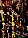 pass....bamboo grove #8 by banrai