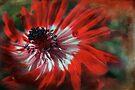 flamenco by Teresa Pople