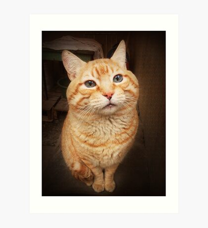 I Know, I Know, I am the Cutest Kitty in the Whole World.  Art Print